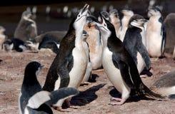 CHINSTRAP PINGUIN Lizenzfreie Stockbilder