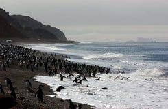 CHINSTRAP PINGUIN Stockfotos