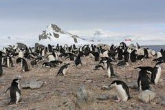 Chinstrap-Pinguinkrähenkolonie in der Antarktis Lizenzfreies Stockbild