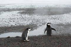 Chinstrap pingwinów wielorybnika ` s zatoka, Antarctica Obrazy Stock