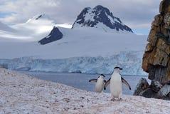 Chinstrap pingwinu odprowadzenie na śniegu w Antarctica zdjęcie royalty free