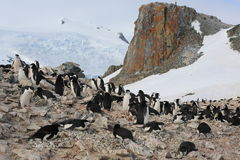 Chinstrap pingwinu rookery w Antarctica obrazy stock