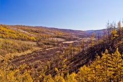 Chiny Wewnętrzny Mongolia Arxan jesieni sceneria Zdjęcia Stock
