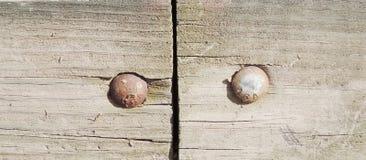 Chiodi arrugginiti su vecchio di legno Fotografia Stock