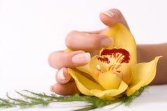 Chiodi con il fiore Immagini Stock