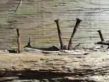 Chiodi di legno ed arrugginiti Immagini Stock