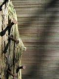 Chiodi di legno ed arrugginiti Fotografia Stock Libera da Diritti