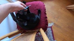 Chiodi di taglio del gatto nero stock footage