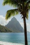 Chiodo da roccia e palma in Santa Lucia Fotografia Stock