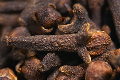 Chiodo di garofano, macro Fotografie Stock
