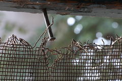 Chiodo nel legno con il recinto arrugginito Fotografia Stock