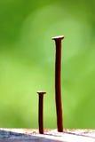 Chiodo nel marrone di legno; rinnovamento; macro Immagine Stock