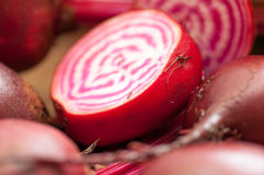 Chioggia or candy cane beets. Red striped chioggia or sweet candy cane beets farm fresh Royalty Free Stock Images