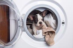 Chiot à l'intérieur de la machine à laver image libre de droits