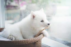 Chiot à la fenêtre, filtre de vintage Photos stock