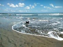 Chiot à la plage Images libres de droits