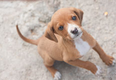 Chiot Photos stock