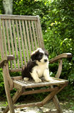 Chiot images stock