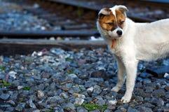 Chiot abandonné Photographie stock libre de droits
