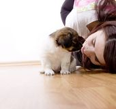 Chiot adorable image stock