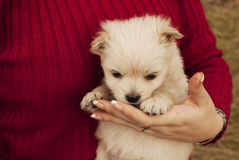 Chiot adorable photographie stock