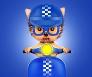 Chiot adorable se reposant sur une motocyclette Images stock