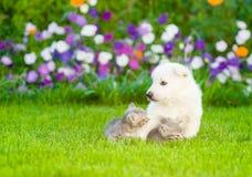 Chiot avec des chatons sur l'herbe verte Image stock
