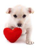 Chiot avec le coeur Photos stock