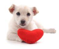 Chiot avec le coeur Image libre de droits