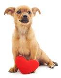 Chiot avec le coeur Photo stock
