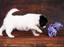 Chiot avec roses Photographie stock libre de droits