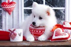 Chiot avec un chiot rouge de coeur avec un coeur rouge Photo stock