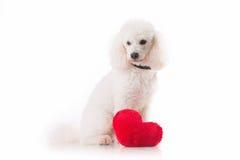 Chiot avec un coeur rouge Images stock