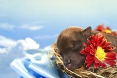 Chiot avec une fleur Photographie stock