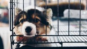 Chiot chez le chien de cage avec tristesse image stock