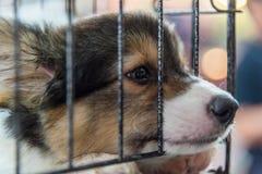 Chiot chez le chien de cage avec tristesse photo libre de droits