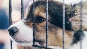 Chiot chez le chien de cage avec tristesse image libre de droits