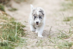 Chiot courant heureux Photo stock