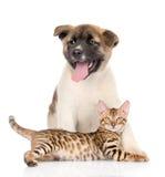 Chiot d'inu d'Akita de Japonais et chaton du Bengale ensemble D'isolement Image libre de droits