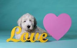 Chiot dans l'amour Photographie stock libre de droits