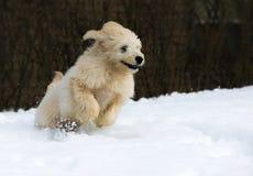 Chiot dans la neige Images stock
