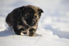 Chiot dans la neige Photographie stock