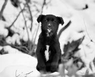 Chiot dans la neige Photos stock
