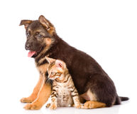 Chiot de berger allemand et chat du Bengale se reposant ensemble D'isolement Images stock