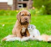 Chiot de Bordeaux et chaton nouveau-né se reposant ensemble sur l'herbe verte Photo libre de droits