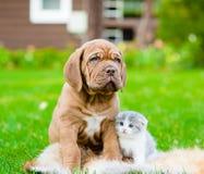 Chiot de Bordeaux et chaton nouveau-né se reposant ensemble sur l'herbe verte Images stock