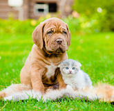Chiot de Bordeaux et chaton nouveau-né se reposant ensemble sur le vert Images stock