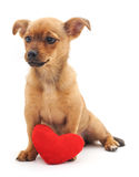Chiot de Brown avec le coeur Photo stock