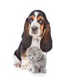 Chiot de chien de basset et chaton écossais se reposant ensemble D'isolement sur le blanc Images stock