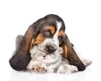 Chiot de chien de basset jouant avec le chaton D'isolement sur le fond blanc Images libres de droits